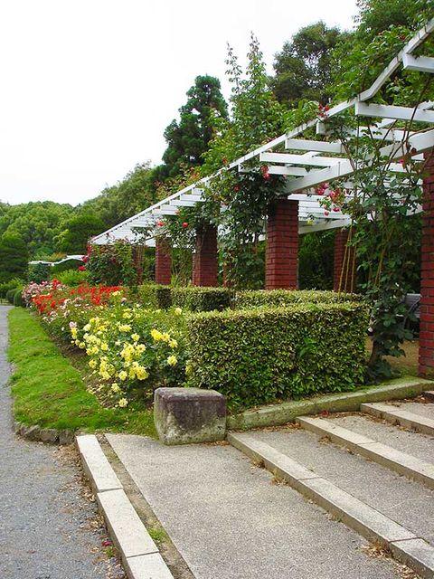 Plant, Shrub, Garden, Walkway, Groundcover, Hedge, Sidewalk, Landscaping, Yard, Annual plant,