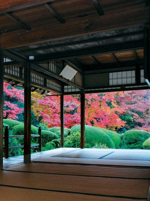 Leaf, Flower, Pink, Petal, Magenta, Ceiling, Botany, Colorfulness, Deciduous, Beam,