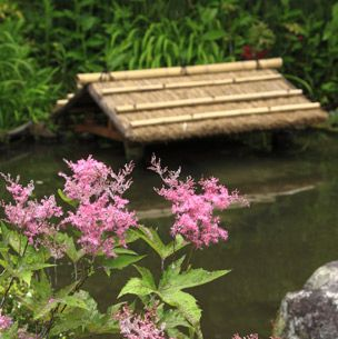 Wood, Plant, Flower, Shrub, Flowering plant, Woody plant, Groundcover, Subshrub, Roof, Lumber,