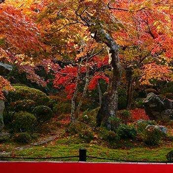 Vegetation, Nature, Deciduous, Branch, Leaf, Red, Landscape, Autumn, Woody plant, Colorfulness,