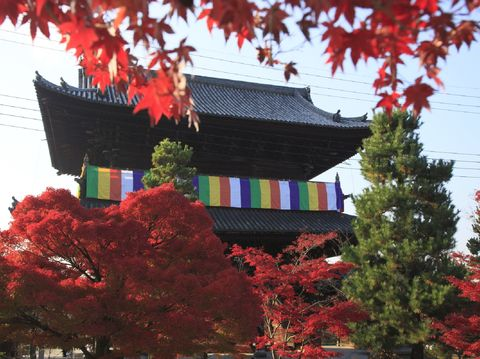 Nature, Chinese architecture, Architecture, Red, Leaf, Tree, Deciduous, Woody plant, Japanese architecture, Colorfulness,