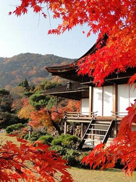 Nature, Deciduous, Leaf, Red, Orange, Autumn, Woody plant, Twig, Coquelicot, Perennial plant,