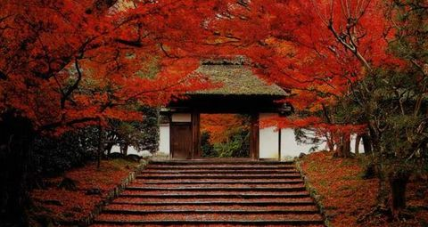 Nature, Vegetation, Stairs, Deciduous, Leaf, Landscape, Red, Woody plant, Orange, Colorfulness,