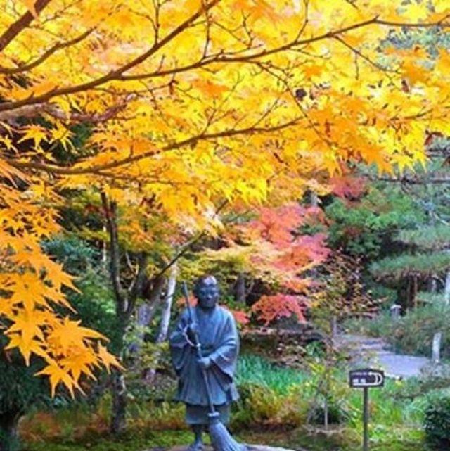 Human, Nature, Deciduous, Yellow, Leaf, Autumn, Sculpture, Woody plant, Twig, Garden,