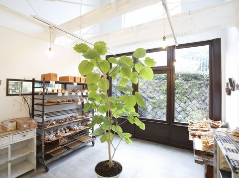 Wood, Interior design, Leaf, Flowerpot, Hardwood, Interior design, Fixture, Daylighting, Shelving, Houseplant,