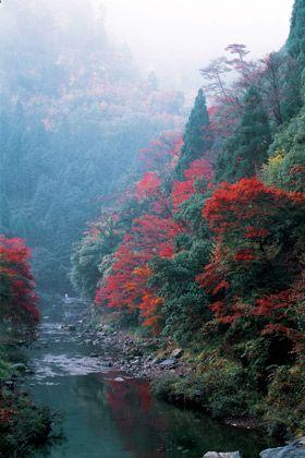 Nature, Vegetation, Natural environment, Natural landscape, Leaf, Red, Landscape, Atmospheric phenomenon, Bank, Watercourse,