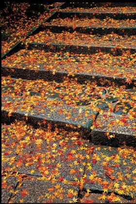 Amber, Orange, Deciduous, Shadow, Autumn,