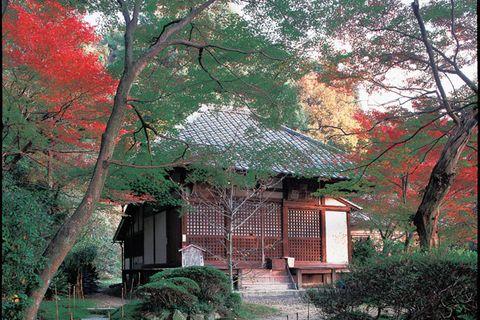 Nature, Vegetation, Green, Branch, Leaf, House, Woody plant, Real estate, Botany, Home,