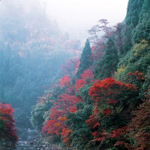 Nature, Vegetation, Natural environment, Natural landscape, Leaf, Red, Landscape, Atmospheric phenomenon, Nature reserve, Bank,