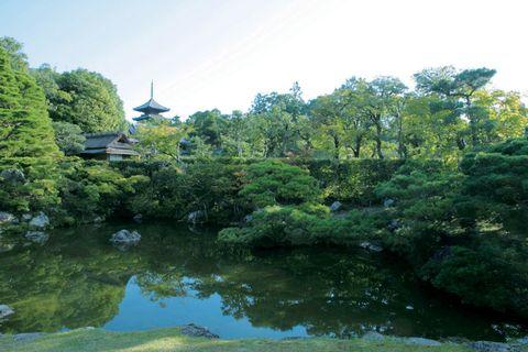 Vegetation, Nature, Natural landscape, Water resources, Tree, Landscape, Pond, Bank, Watercourse, Garden,