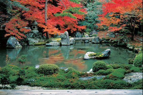 Nature, Vegetation, Natural landscape, Landscape, Pond, Leaf, Deciduous, Garden, Bank, Reflection,