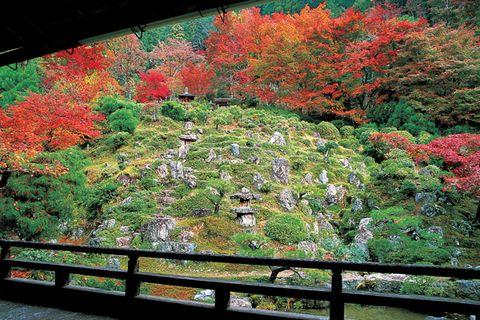 Vegetation, Nature, Leaf, Red, Plant community, Landscape, Natural landscape, Deciduous, Shrub, Botany,