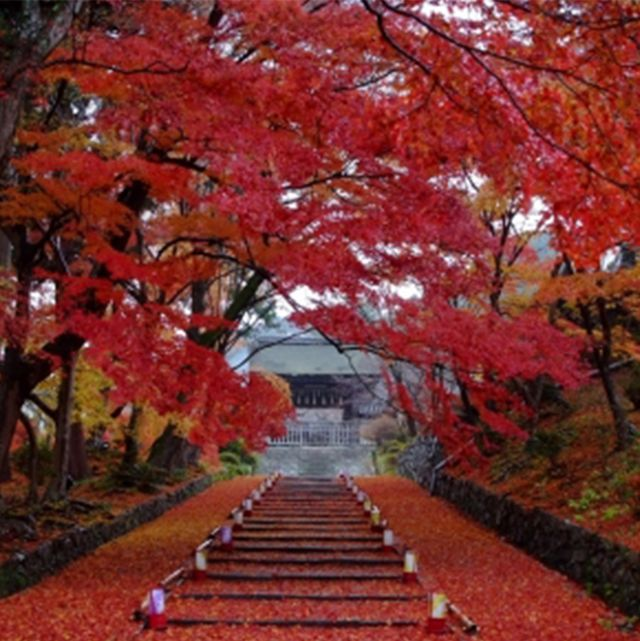 Nature, Deciduous, Leaf, Red, Stairs, Autumn, Woody plant, Orange, Twig, Symmetry,