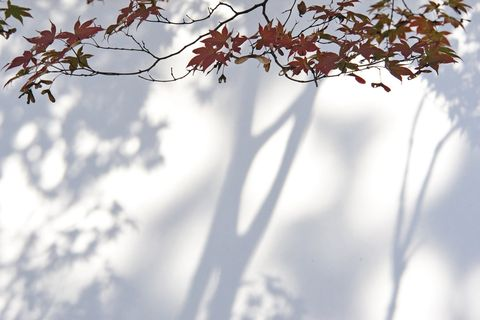 Branch, Daytime, Twig, Leaf, Deciduous, Woody plant, Sunlight, Atmospheric phenomenon, Autumn, Morning,