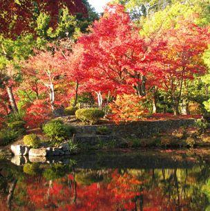 Body of water, Nature, Vegetation, Reflection, Natural landscape, Leaf, Landscape, Red, Pond, Deciduous,