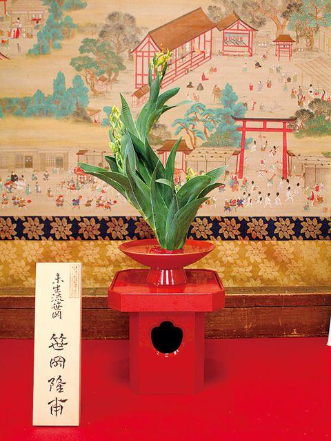 Flowerpot, Houseplant, Interior design, Flowering plant, Vase, Coquelicot, Artifact, Plant stem, Perennial plant, Floral design,