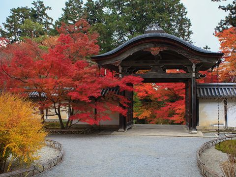 Nature, Deciduous, Leaf, Tree, Red, Chinese architecture, Autumn, Woody plant, Japanese architecture, Botany,