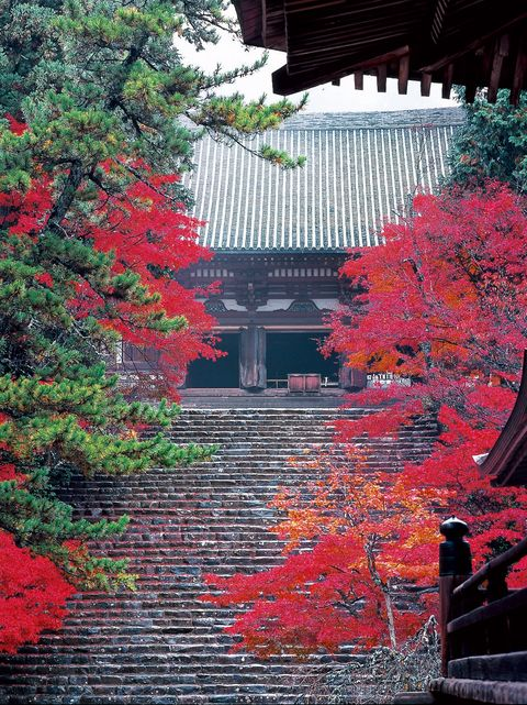 Nature, Red, Leaf, Tree, Deciduous, Chinese architecture, Colorfulness, Japanese architecture, Autumn, Place of worship,