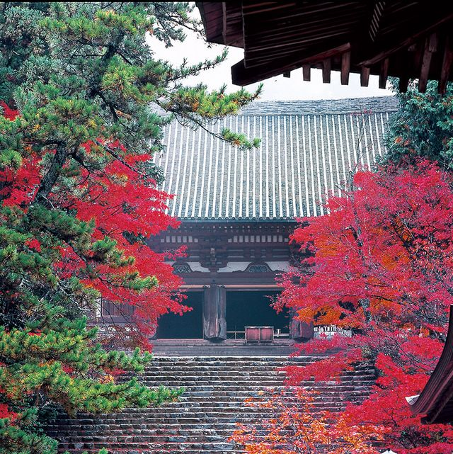 Red, Leaf, Tree, Chinese architecture, Colorfulness, Botany, Tints and shades, Deciduous, Japanese architecture, Garden,