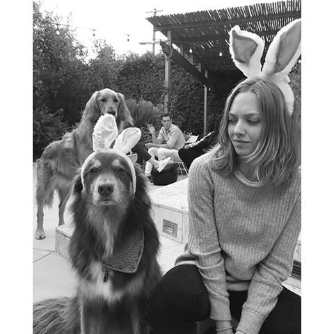 Dog breed, Human, Dog, Vertebrate, Carnivore, Sporting Group, Costume accessory, Companion dog, Fur, Canidae,