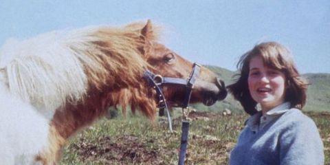 Horse, Pasture, Grass, Mane, Bridle, Livestock, Grassland, Mare, Pony, Riding instructor,