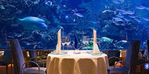 Tablecloth, Vertebrate, Furniture, Table, Linens, Fish, Chair, Marine mammal, Home accessories, Underwater,