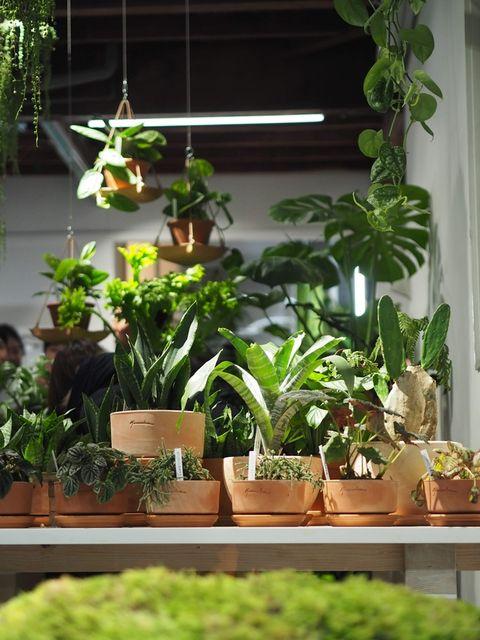 Houseplant, Flowerpot, Plant, Flower, Botany, Herb, Room, Nepenthes, Garden, Interior design,