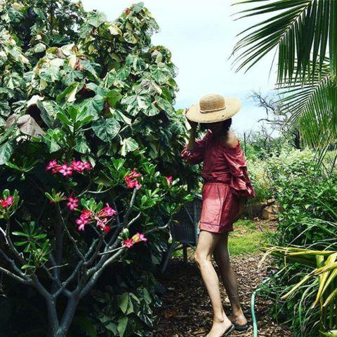 Plant, Tree, Flower, Botany, Shrub, Camellia,
