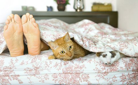 Cat, Felidae, Small to medium-sized cats, Skin, Tabby cat, Textile, Carnivore, Linens, Hand, Fur,