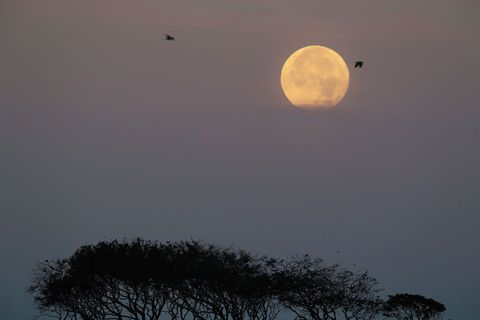 Moon, Sky, Full moon, Atmospheric phenomenon, Celestial event, Astronomical object, Atmosphere, Tree, Morning, Evening,