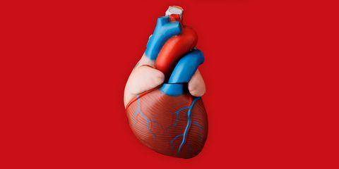 Peach, Human anatomy, Nerve, Stomach, Blood vessel,