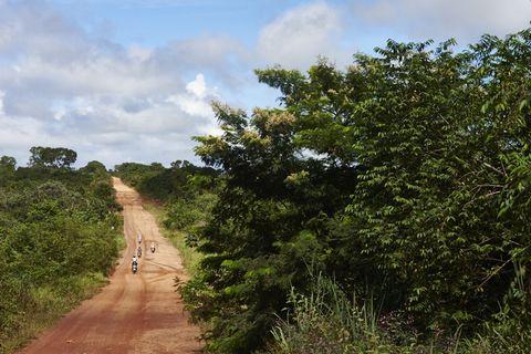 Plant community, Trail, Dirt road, Soil, Shrubland, Bicycle, Path, Jungle, Cycle sport, Mountain biking,