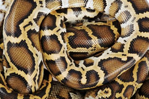 Snake, Organism, Reptile, Vertebrate, Terrestrial animal, Scaled reptile, Iris, Adaptation, Wildlife, Organ,
