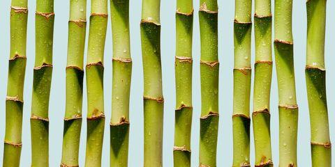 Green, Yellow, Bamboo, Terrestrial plant, Plant stem, Cane, Vascular plant,