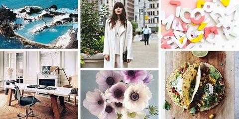 Petal, Photograph, Purple, Street fashion, Collage, Travel, Recipe, Lavender, Photography, Violet,