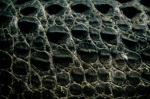 Pattern, Grey, Design, Close-up, Natural material,