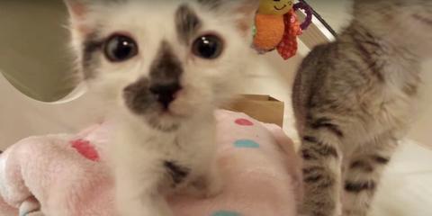 mc-kitten-nursery-video