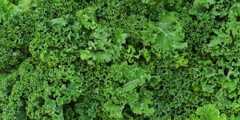 Green, Leaf, Groundcover, Herb, Annual plant, Herbaceous plant, Subshrub, Perennial plant, Liverwort, Ivy family,
