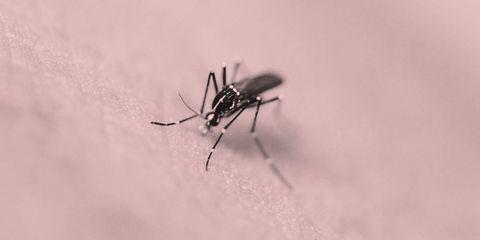 Invertebrate, Insect, Pest, Arthropod, Beauty, Grey, Photography, Macro photography, Wildlife, Parasite,