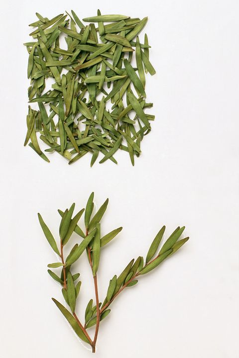 """<p>Tea tree oil is another multi-purpose remedy that has <a href=""""http://www.teatree.org.au/teatree_about.php"""" target=""""_blank"""">historically functioned</a> as an antiseptic applied topically for skin maladies such as cuts, dandruff, and acne (which is why it's commonly found in skin salves and shampoos). Tea tree oil has also <a href=""""http://articles.mercola.com/herbal-oils/tea-tree-oil.aspx"""" target=""""_blank"""">been used</a> to cure foot fungus, kill mold, and disinfect toothbrushes.</p>"""