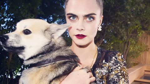 lip, dog breed, dog, carnivore, mammal, earrings, jewellery, eyelash, beauty, iris,