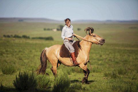 Human, Bridle, Halter, Plain, Horse supplies, Grassland, Landscape, Saddle, Mammal, Horse,