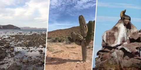 Cloud, Rock, Formation, Bedrock, Cumulus, Coast, Badlands, Shore, Cactus, Wetland,
