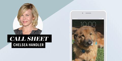 Dog, Canidae, Dog breed, Carnivore, Photography, Technology, Companion dog, Electronic device, Photo caption,