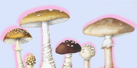 Mushroom, Edible mushroom, Agaricaceae, Shiitake, Agaricus, Fungus, Bolete, Agaricomycetes, Organism, Agaric,