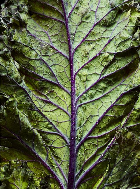 Leaf, Leaf vegetable, Terrestrial plant, Purple, Chard, Annual plant, Herb, Whole food,