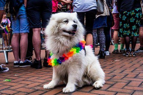 Dog, Mammal, Vertebrate, Canidae, Dog breed, Carnivore, Kennel club, Companion dog, Sporting Group, Fur,