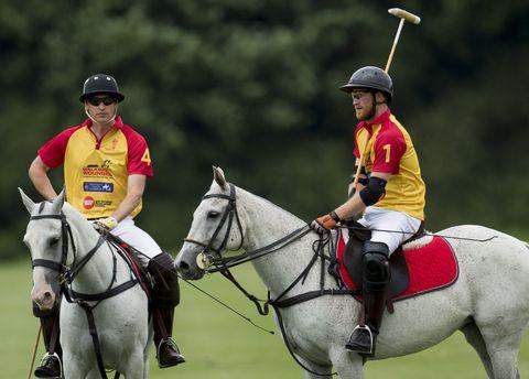 Horse, Bridle, Animal sports, Mammal, Sports, Rein, Vertebrate, Halter, Horse supplies, Horse tack,