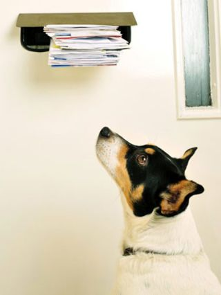 dog staring at mail
