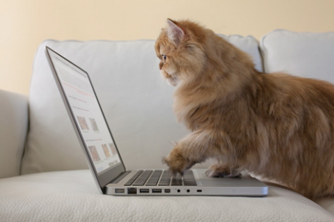 10 Secrets Every Woman Needs to Know Before Online Shopping